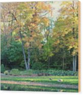 Mae Stecker Park In Shelby Township Michigan Wood Print