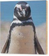 Magellanic Penguin In Argentina Wood Print