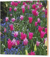 Magenta And White Tulips Wood Print