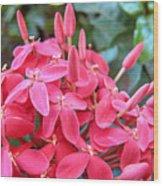 Magenta Flora Wood Print