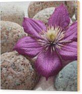 Clematis Flower On Meditation Stones Wood Print