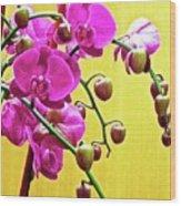 Magenta Orchid 3 Wood Print