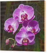 Magenta Orchids Wood Print