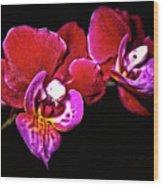 Magenta Phaleonopsis Orchid Wood Print