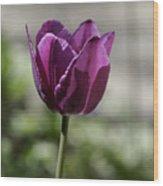 Magenta Tulip Squared Wood Print