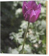 Magenta Tulip Wood Print