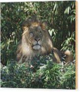 Magestic Lion Wood Print