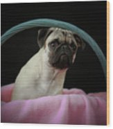 Maggie In A Basket Wood Print