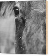Maggie The Cow Abstract Wood Print