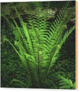 Magic Fern Wood Print