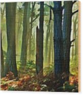 Magic Forest Wood Print by Helen Carson