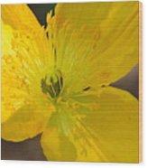Magic Of The Golden Poppy Wood Print