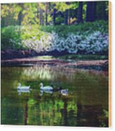 Magical Beauty At The Azalea Pond Wood Print