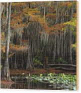 Magical Cypress Trees Forest Wood Print