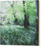 Magical Forest At Blarney Castle Ireland Wood Print