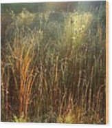 Magical Light On The Marsh Wood Print