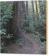 Magical Path Through The Redwoods On Mount Tamalpais Wood Print