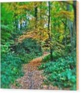 Magical Woodland Walk Wood Print
