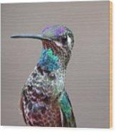 Magnificent Hummingbird Male Wood Print