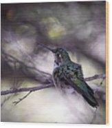 Magnificent Hummingbird Wood Print