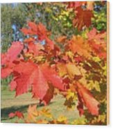 Magnificent Maple Leaves Wood Print