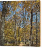 Magnificent Maples Wood Print