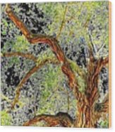 Magnificent Tree Wood Print