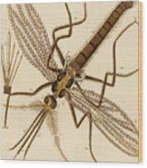 Magnified Mosquito Wood Print