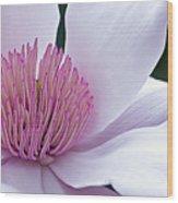 Magnolia 06 Wood Print
