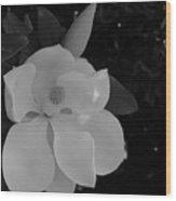 Magnolia And Blossom Wood Print