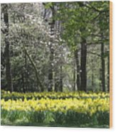 Magnolia And Daffodils Wood Print