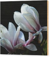 Magnolia And House Guest Wood Print