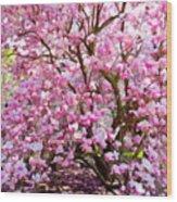 Magnolia Beauty #14 Wood Print