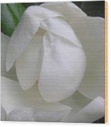 Magnolia Begins Its Blooming Wood Print