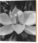 Magnolia Bloom B/w Wood Print
