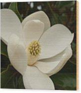 Southern Magnolia Bloom Wood Print