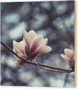 Magnolia Blossom 2 Wood Print