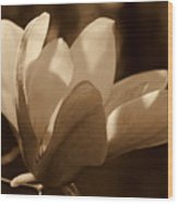 Magnolia Blossom Bw Wood Print