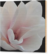 Magnolia Blossom I Wood Print