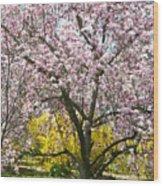 Magnolia Blossoms Galore Wood Print