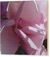 Magnolia Encore  Wood Print