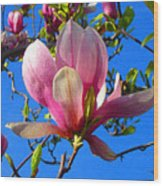 Magnolia Flower Wood Print