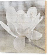 Magnolia Flower Wood Print by Elena Elisseeva