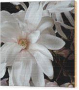 Magnolia Flower Wood Print