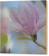Magnolia Flower IIi Wood Print