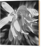 Magnolia Flower In Black And White Wood Print