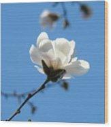 Magnolia Flower Tree Art Prints Blue Sky Floral Baslee Troutman Wood Print