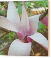 Magnolia Flowering Tree Art Prints White Pink Magnolia Flower Baslee Troutman Wood Print