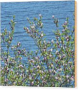 Magnolia Flowering Tree Blue Water Wood Print