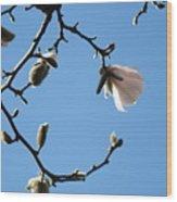 Magnolia Flowers Budding Art Prints Spring Floral Baslee Troutman Wood Print